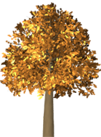 fall-tree.png